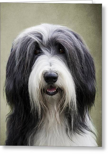Gray Hair Greeting Cards - Bearded Collie Dog Greeting Card by Ethiriel  Photography