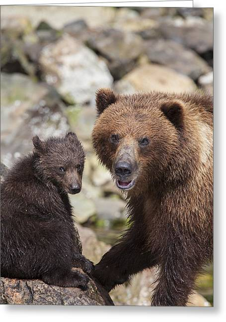 Southeast Alaska Greeting Cards - Bears at a River Greeting Card by Tim Grams