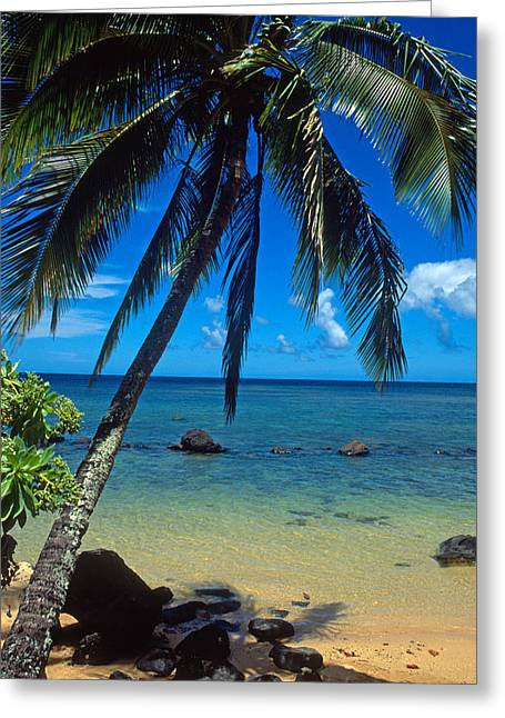 Tree Framed Prints Greeting Cards - Beautiful Anini Beach  Greeting Card by Kathy Yates