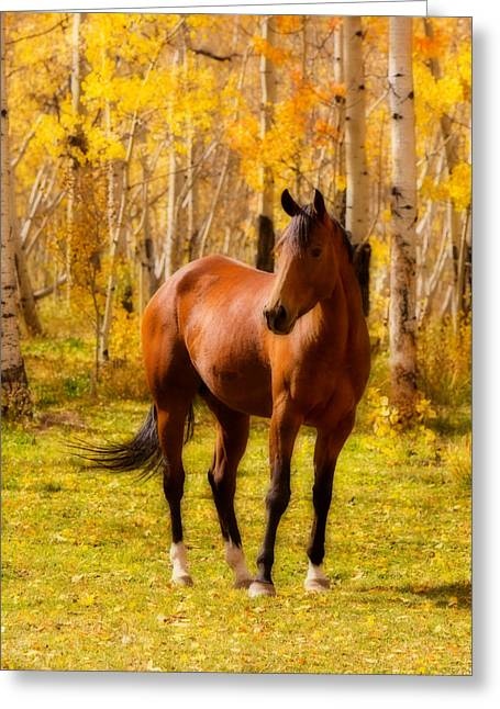 Horse Images Greeting Cards - Beautiful Autumn Horse Greeting Card by James BO  Insogna