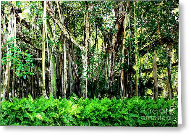 """banyan Tree"" Greeting Cards - Beautiful Banyan Greeting Card by Carol Groenen"
