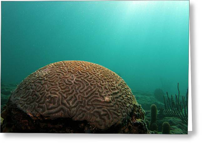 Snorkel Greeting Cards - Beautiful Brain Greeting Card by Kimberly Mohlenhoff