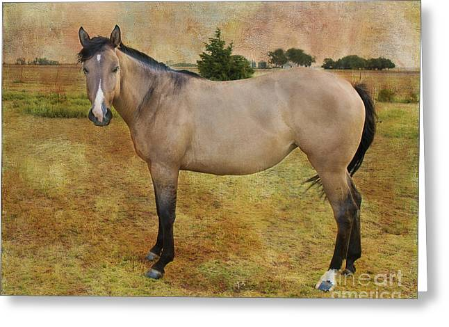 Quarter Horses Greeting Cards - Beautiful Buckskin Greeting Card by Betty LaRue