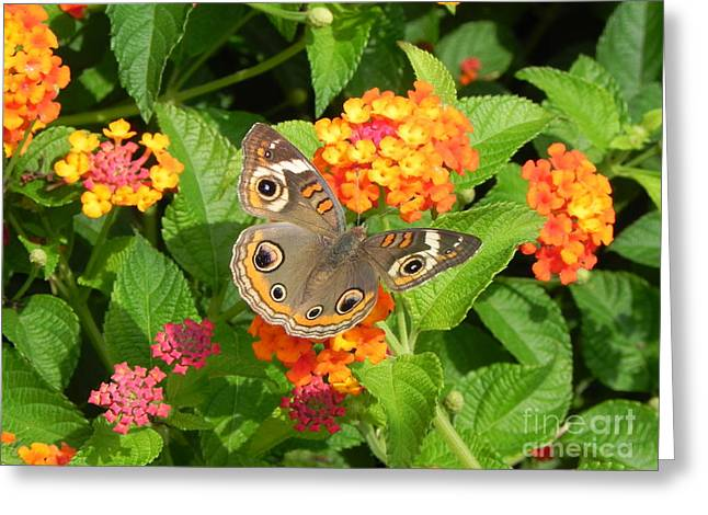 Beautiful Butterfly Greeting Card by Sandy Owens