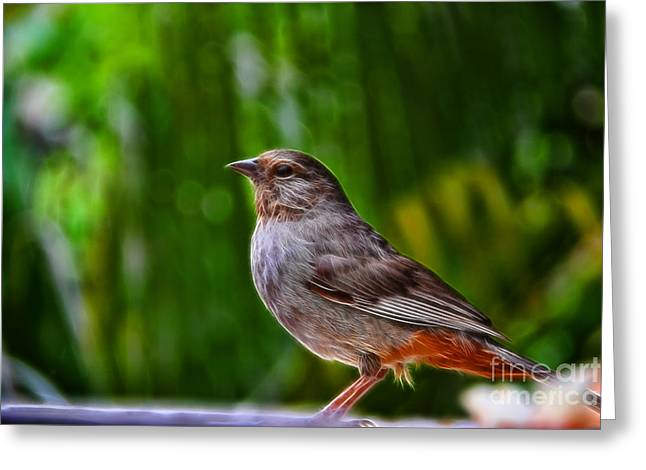 Brown Towhee Greeting Cards - Beautiful California Towhee Greeting Card by Mariola Bitner