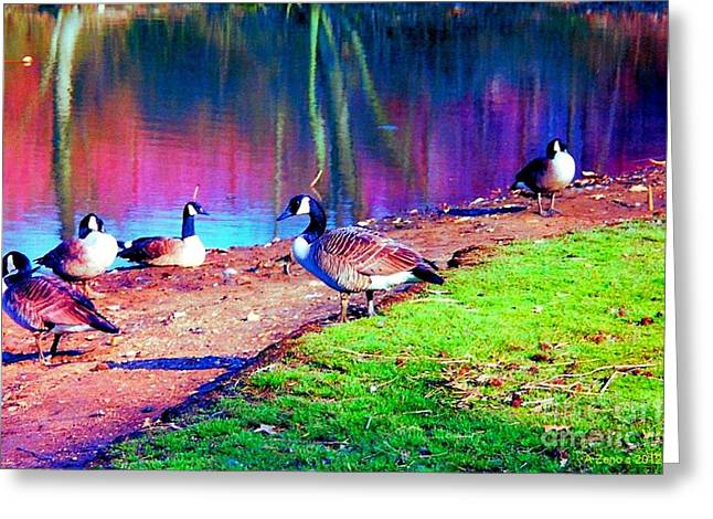 Beautiful Canadian Geese  Greeting Card by Annie Zeno
