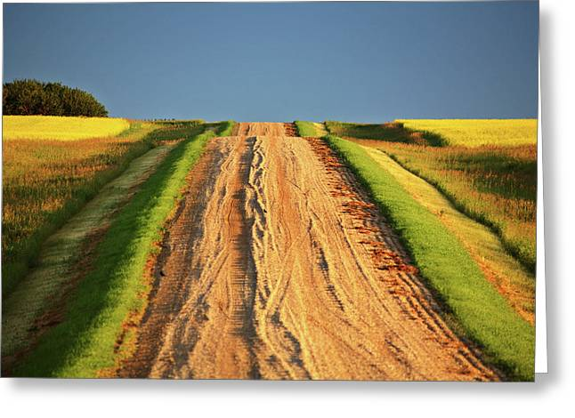 Summer Scene Greeting Cards - Beautiful colors along a Saskatchewan country road Greeting Card by Mark Duffy