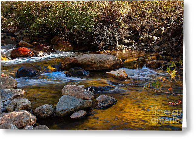 Picturesqueness Greeting Cards - Beautiful Colors Greeting Card by Robert Bales