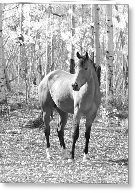 Striking Images Greeting Cards - Beautiful Horse in Black and White Greeting Card by James BO  Insogna