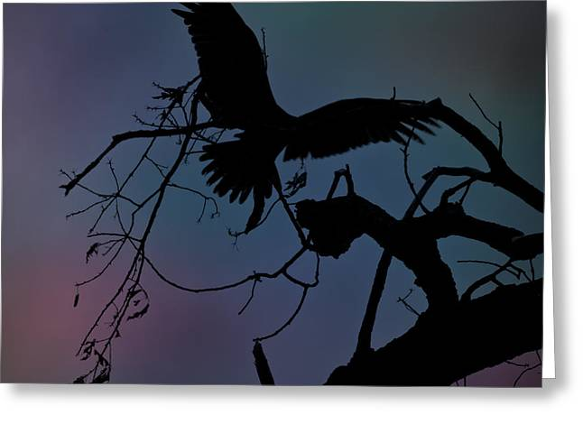 Vulture Silhouettes Greeting Cards - Beautiful Landing Greeting Card by Kim Henderson