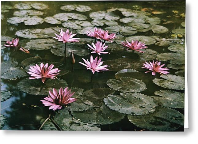 Beautiful Pink Lotus Water Lilies Bloom Greeting Card by W. Robert Moore