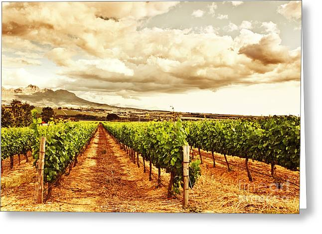 Grapevine Autumn Leaf Greeting Cards - Beautiful vineyard Greeting Card by Anna Omelchenko