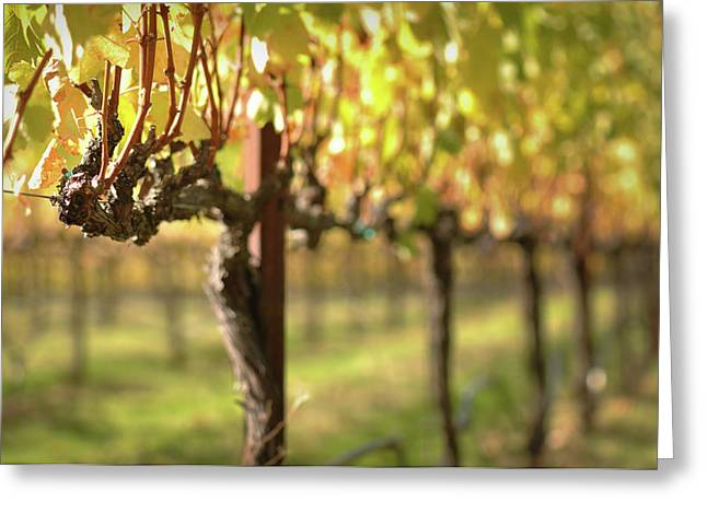 Grapevine Autumn Leaf Greeting Cards - Beautiful Vineyard in Napa Valley Greeting Card by Brandon Bourdages