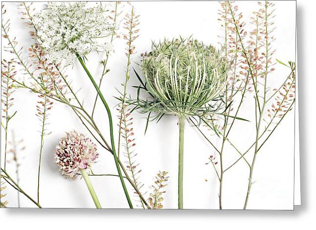 Green Chives Greeting Cards - Beautiful Weeds Greeting Card by HD Connelly