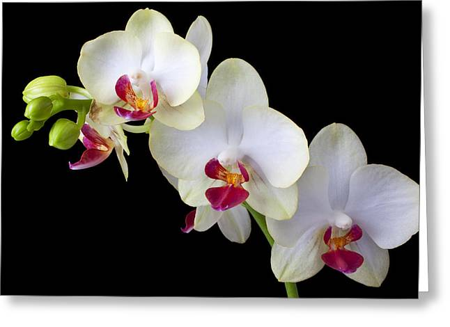 Beautiful White Orchids Greeting Card by Garry Gay