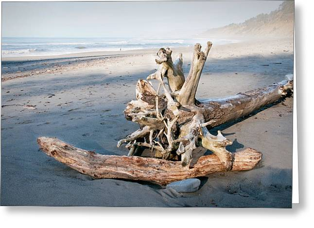 Agate Beach Greeting Cards - Beauty After Death Greeting Card by Kent Sorensen