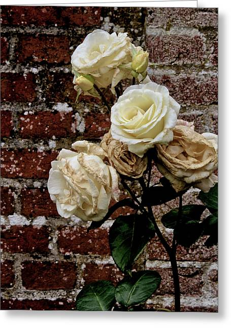 Wall Greeting Cards - Beauty And The Beast Greeting Card by Odd Jeppesen