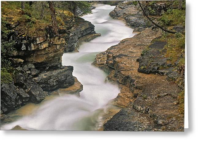 Beauty Creek, Banff National Park Greeting Card by Darwin Wiggett
