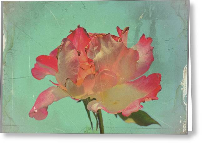 Satisfaction Greeting Cards - Beauty Ephemeral Greeting Card by Paulo Zerbato