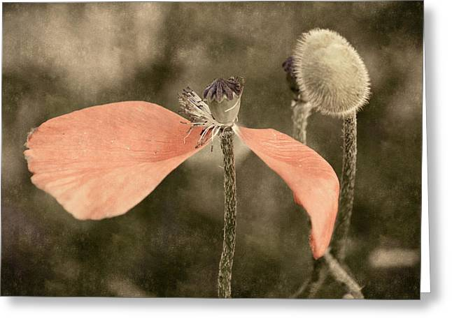 Beauty Fades Greeting Card by Bill Pevlor