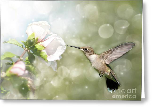 Althea Photographs Greeting Cards - Beauty in flight Greeting Card by Sari ONeal