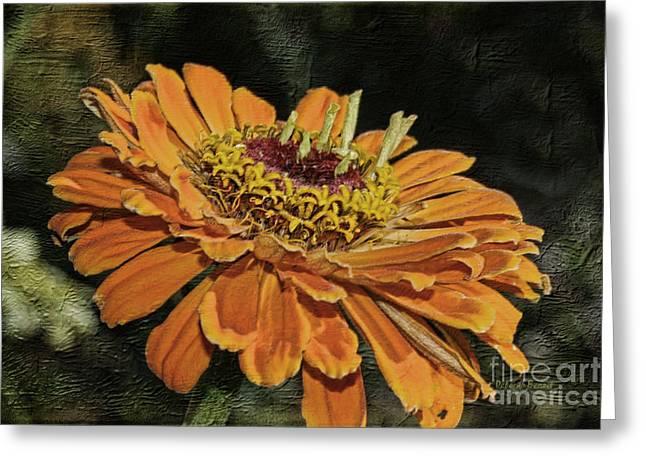 Macro Mixed Media Greeting Cards - Beauty In Orange Petals Greeting Card by Deborah Benoit