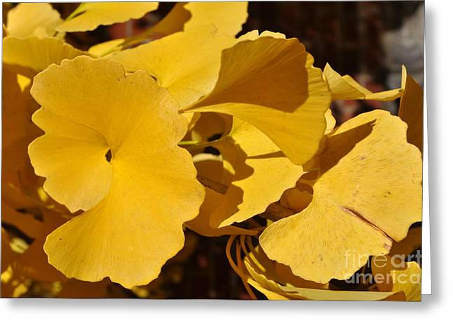 Beauty in the Leaves Greeting Card by Denise Ellis