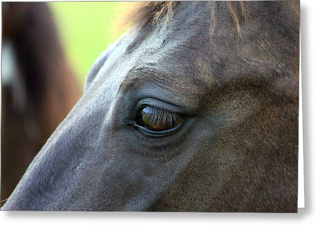Quarter Horse Greeting Cards - Beauty is in the Eye Greeting Card by Karon Melillo DeVega