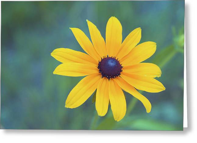 Black Eyed Susan Print Greeting Cards - Beauty Is In The Simplest Things Greeting Card by Aimelle