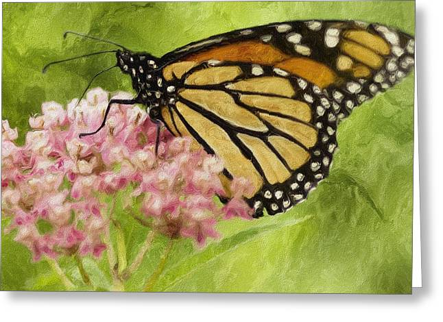 Feeding Digital Greeting Cards - Beauty Of Nature Greeting Card by Jack Zulli
