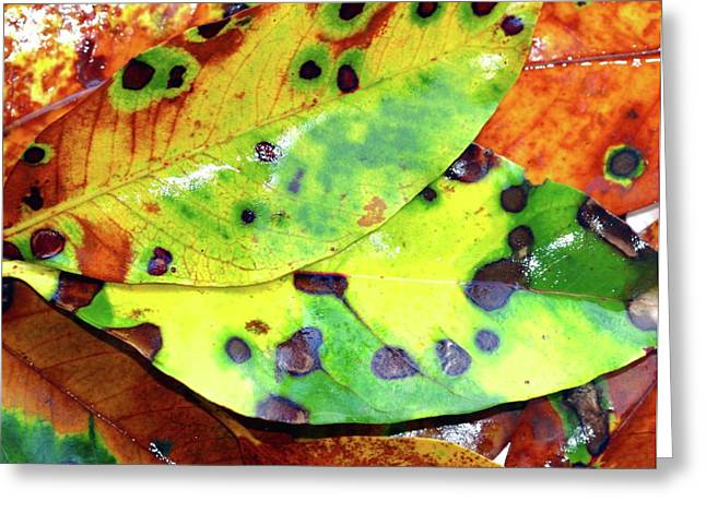 Most Popular Photographs Greeting Cards - Beauty of the change Greeting Card by Karen Elzinga