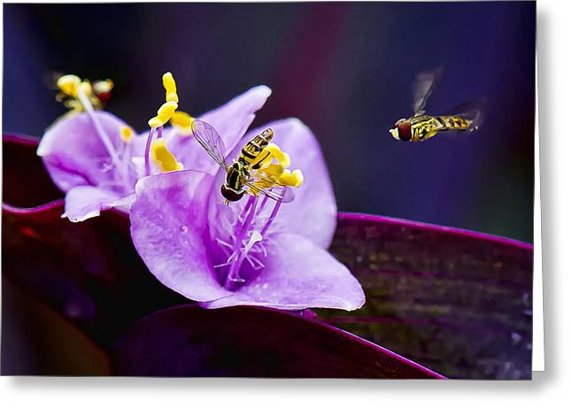 Beauty's Visitors Greeting Card by Michael Putnam