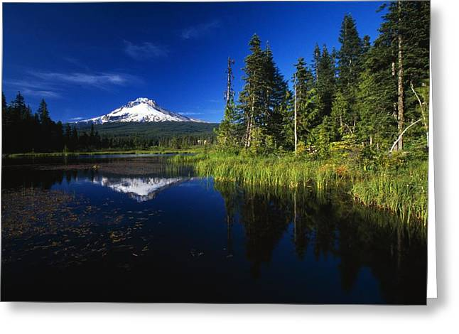 Beaver Dam In Pond, Reflection Of Mount Greeting Card by Natural Selection Craig Tuttle