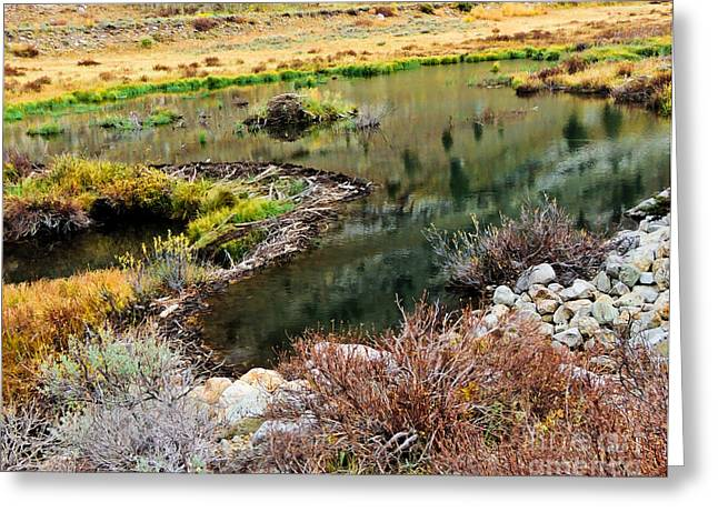 Dam Framed Prints Greeting Cards - Beaver Dam  Greeting Card by L J Oakes