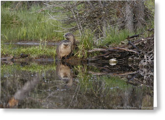 Beaver Pair Greeting Card by Charles Warren