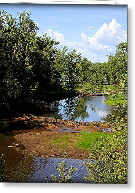 Beaver Lake Photographs Greeting Cards - Beaver Pond on St Croix Greeting Card by Tam Graff