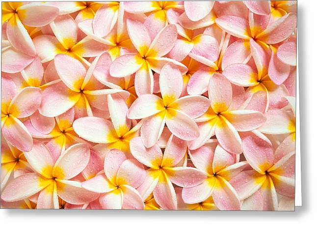 Bed Spread Greeting Cards - Bed Of Light Greeting Card by Kyle Rothenborg - Printscapes