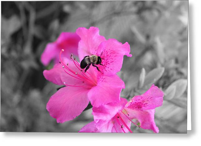 Florida Flowers Mixed Media Greeting Cards - Bee and azalea  Greeting Card by Evelyn Patrick