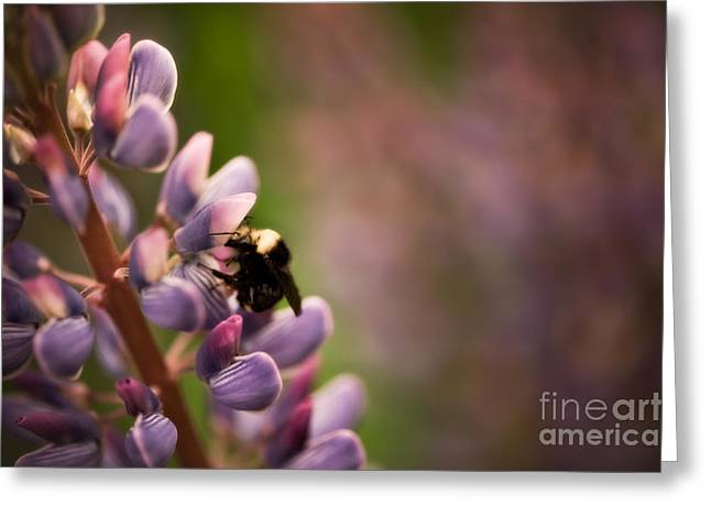 Close Focus Floral Greeting Cards - Bee and Lupine Greeting Card by Venetta Archer