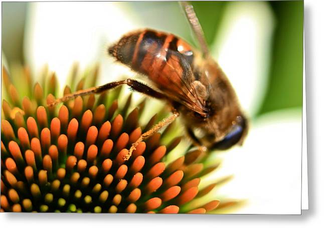 Sunny Greeting Cards - Bee at work Greeting Card by Jordan Drapeau