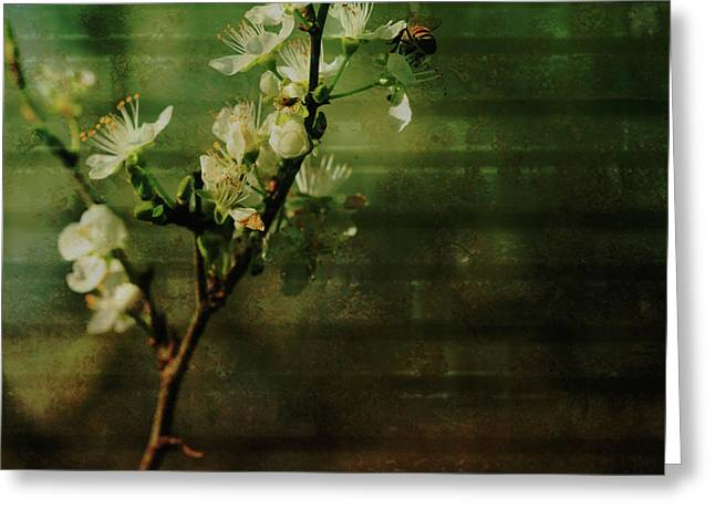Flowering Branch Greeting Cards - Bee Brunch Greeting Card by Bonnie Bruno