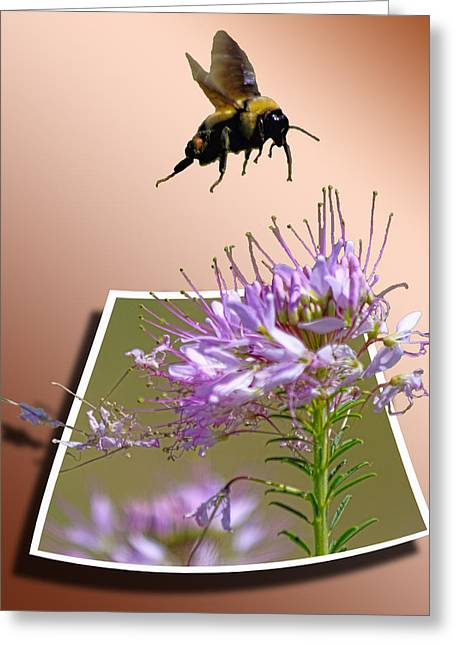 Out Of Frame Greeting Cards - Bee Free Greeting Card by Shane Bechler