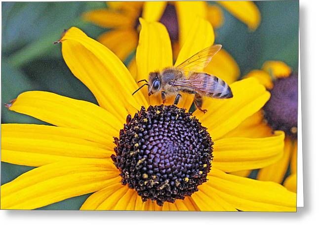 Becky Greeting Cards - Bee hanging out with Susan Greeting Card by Becky Lodes