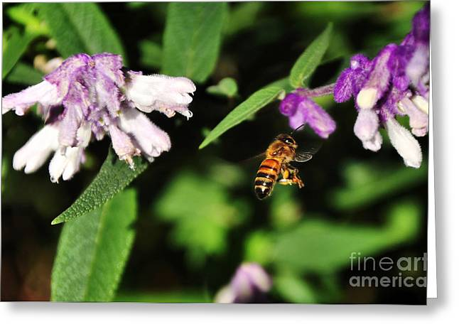 Bee in Flight Greeting Card by Kaye Menner