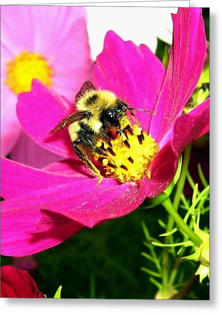 Paint Effect Greeting Cards - Bee-Line 3 Greeting Card by Will Borden