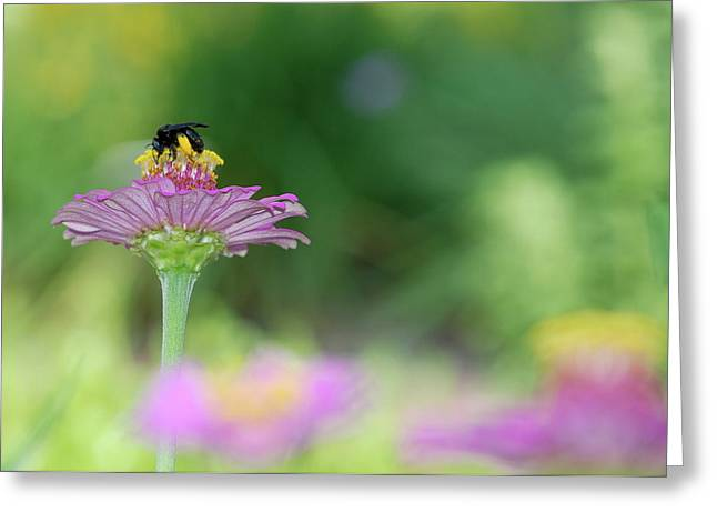 Bee Marks The Spot Greeting Card by Kathy Gibbons