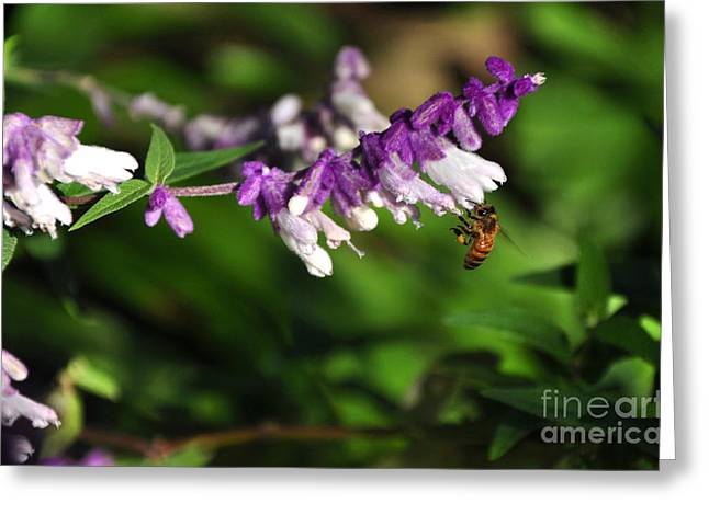 At Work Greeting Cards - Bee on Flower Greeting Card by Kaye Menner