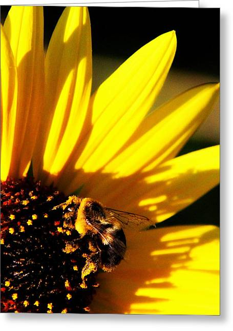 Floral Photographs Greeting Cards - Bee on Sunflower Greeting Card by Tam Graff