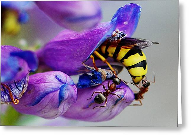 Stinger Greeting Cards - Bee parking lot Greeting Card by Melany Sarafis