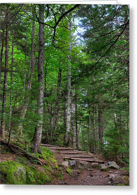 Acadia National Park Photographs Greeting Cards - Beech Mountain Trail Acadia Greeting Card by Steve Gadomski
